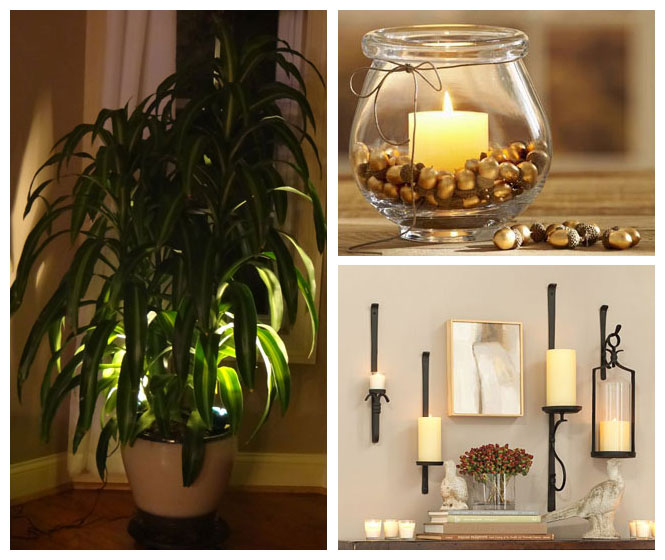 Marvelous Indoor Plant Accent Light