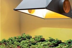 Indoor Plant Light Home Depot