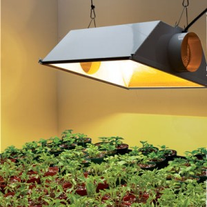 Plant Lamps At Home Depot
