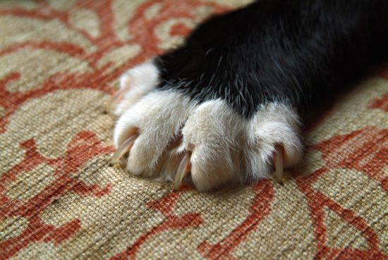 ways to stop cats from scratching your furniture